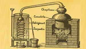 Estrazione oli essenziali